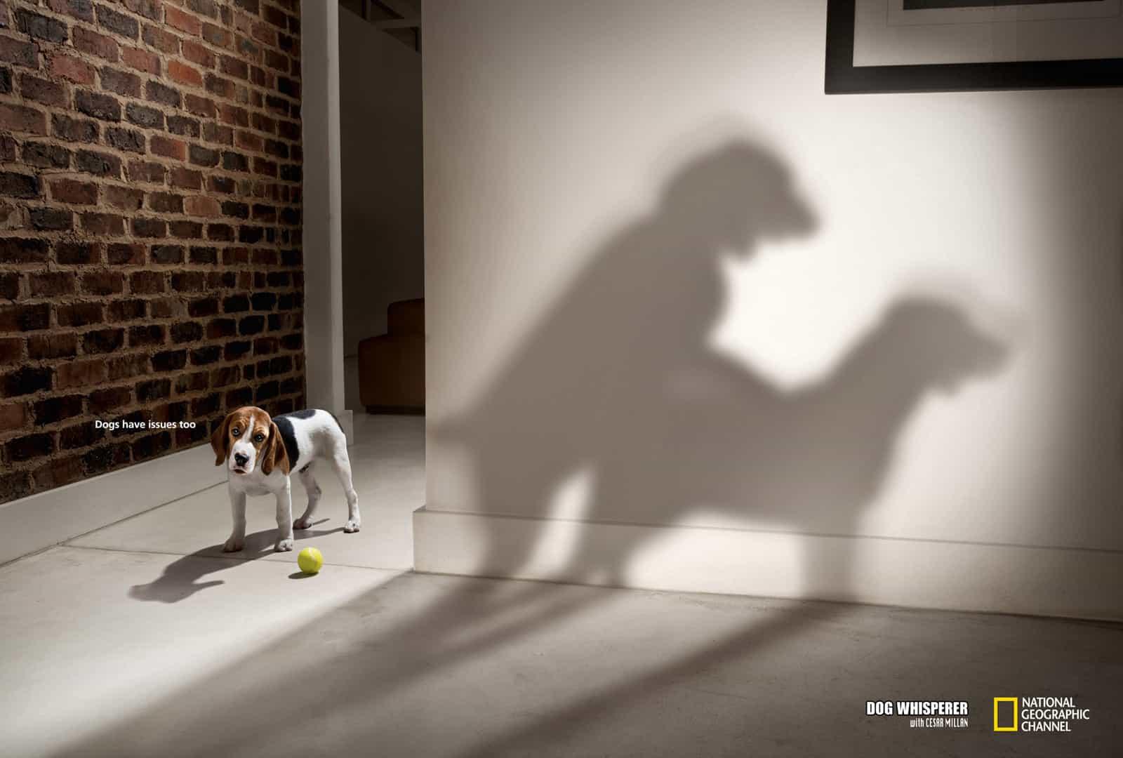 psicologia perros